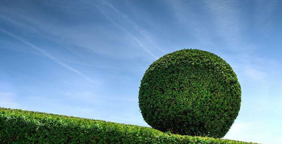 recorte-de-setos-en-zaragoza-jardines