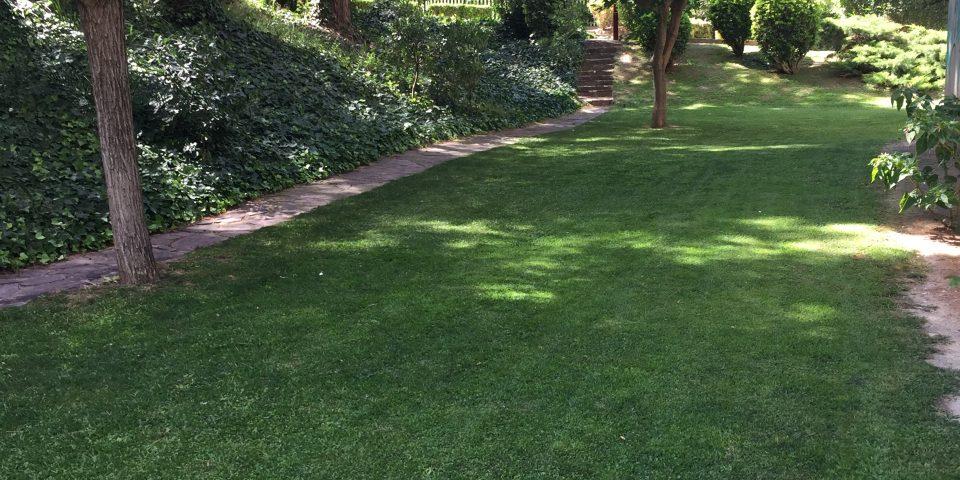 jardines-zaragoza-mantenimiento-comunidades-jardineria-cesped-cortar