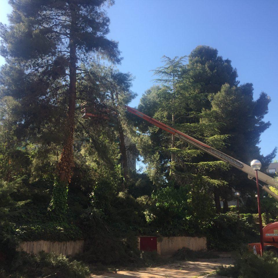 jardines-zaragoza-poda-pinos-1