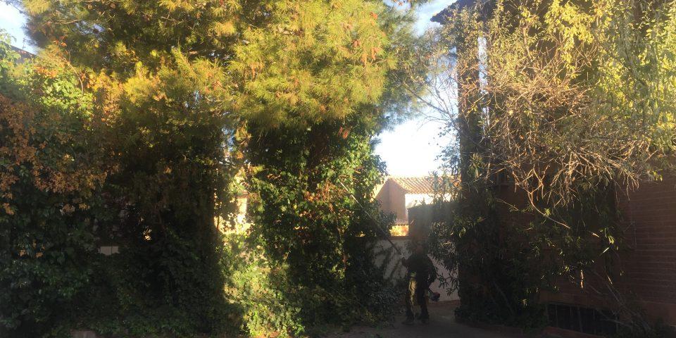 jardines-zaragoza-tala-pino-cortar-arbol